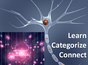 Learn Categorize Connect