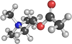 Acetylcholine (ACh) neurotransmitter