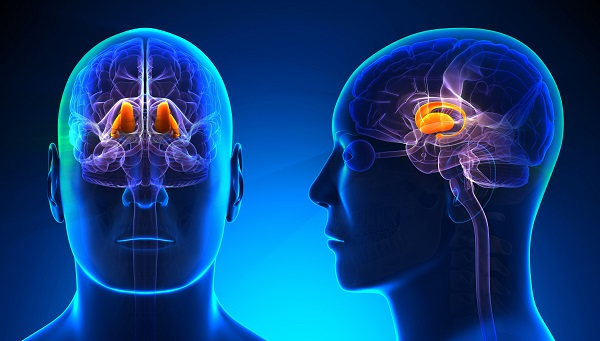 thalamus - Understanding Context