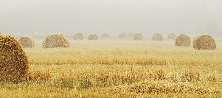 Field of Haystacks