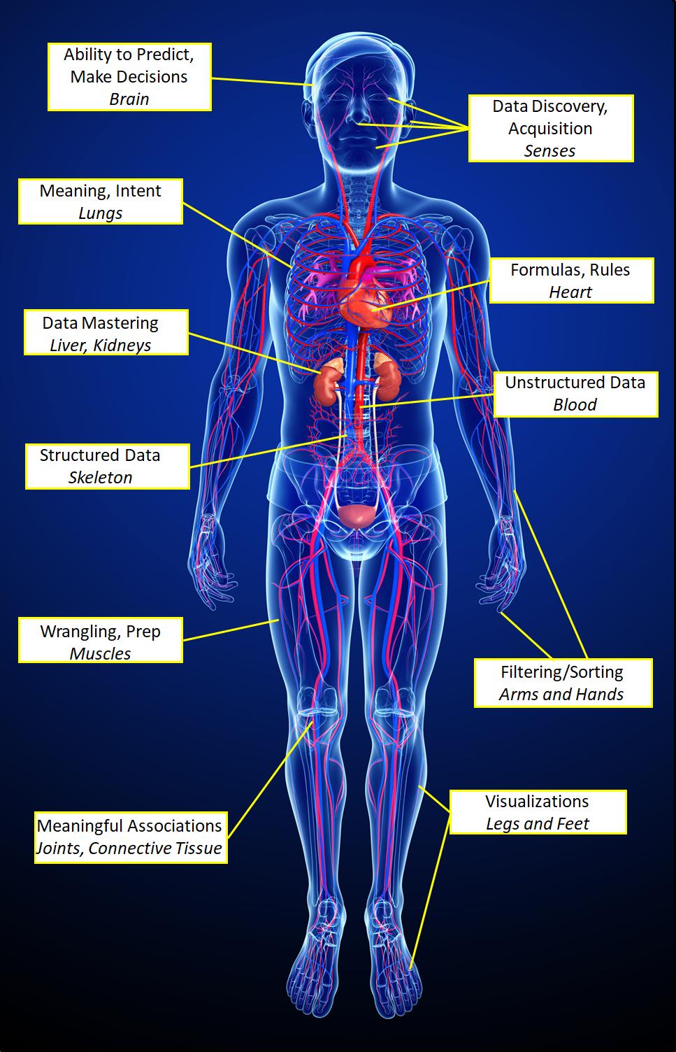 Anatomy of Insight